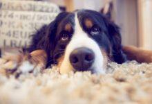 Photo of L'assurance pour animaux de compagnie est-elle une idée intelligente pour couvrir les factures du vétérinaire?