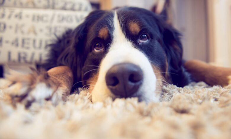 L'assurance pour animaux de compagnie est-elle une idée intelligente pour couvrir les factures du vétérinaire?