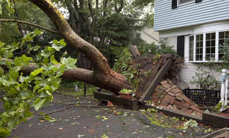 Photo of Réclamations d'assurance habitation et dommages causés par les arbres