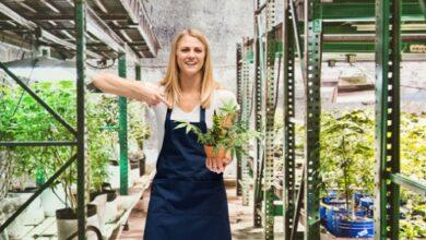Photo of Cultiver du pot à la maison dévalorise considérablement la propriété – Sondage