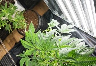 Photo of Un groupe de propriétaires d'immeubles de placement exprime ses préoccupations concernant la légalisation du cannabis