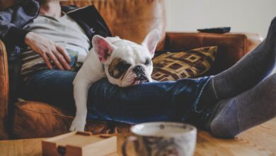 Photo of Comment avoir un chien affecte-t-il votre assurance habitation?