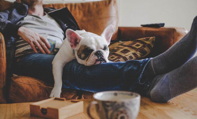 Comment avoir un chien affecte-t-il votre assurance habitation?