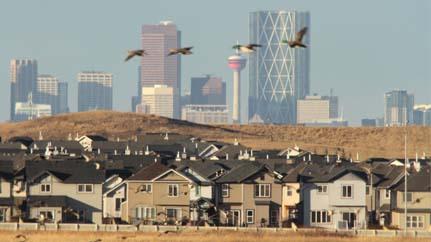 Photo of Les agents immobiliers de Calgary adoptent une vision à long terme